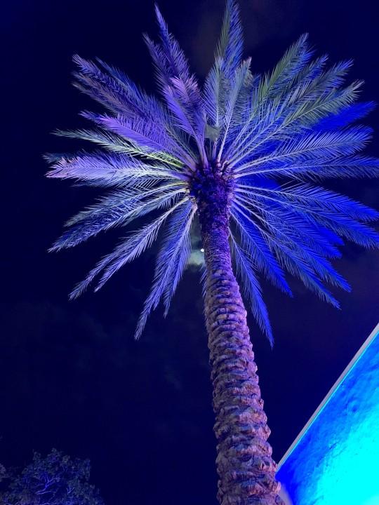 Miami beach - neon palm tree - by Mylilplace