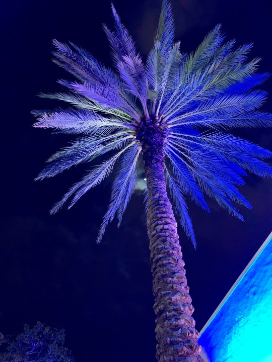 Miami beach - neon palm tree - by Mylilplace